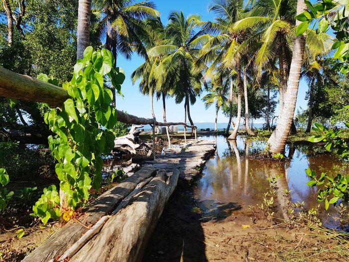 Tree Water Sea Beach Palm Tree Sky Adventures In The City