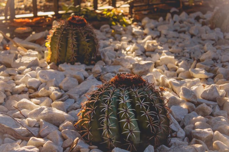🌵 Beauty In Nature Thorn Plant My Best Photo