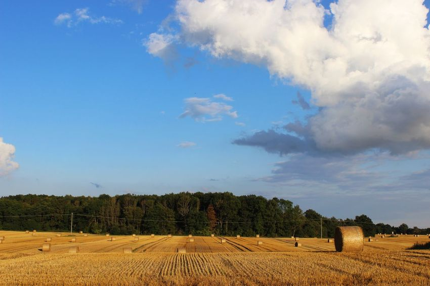 Agriculture Bale  Beauty In Nature Blue Cloud Cloud - Sky Cloudy Field Growth Hay Hay Bales Horizon Over Land Idyllic Landscape Nature No People Non-urban Scene Outdoors Remote Rural Scene Scenics Sky Tranquil Scene Tranquility Tree