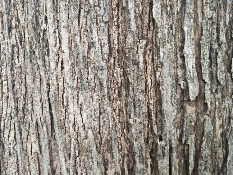 Backgrounds Full Frame Textured  Pattern Rough Wood - Material Close-up Weathered Abstract Backgrounds Textured Effect