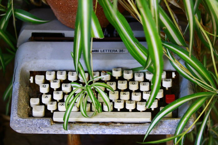 no edit Inspirational Old Tastatur Typewriter Writing EyeEm Selects Plant Green Color Close-up