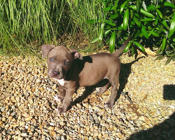 Hanging Out Hello World Enjoying Life Colour Of Life Mission Nature Scenics Wonders First Eyeem Photo Outdoors Tranquil Scene Pit Bull Adorable Puppy Sweet Moments