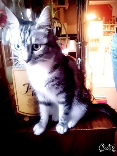 One Animal Amy Einfach So Pet Portraits