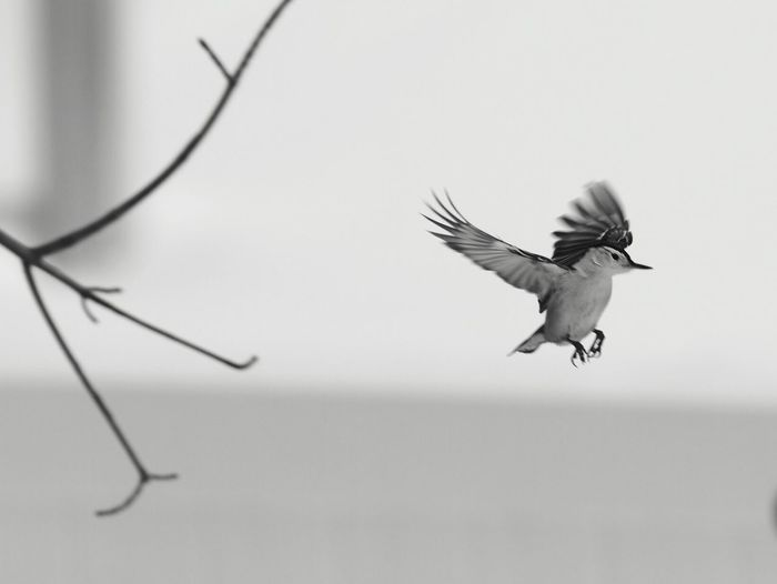 Bird flying over the background