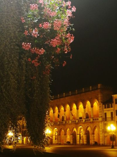 Night Illuminated No People Architecture Travel Destinations City Padova ⛪️ Lights Light And Shadow Light In The Darkness Italy🇮🇹 City Outdoors Palace Building Exterior Flowers