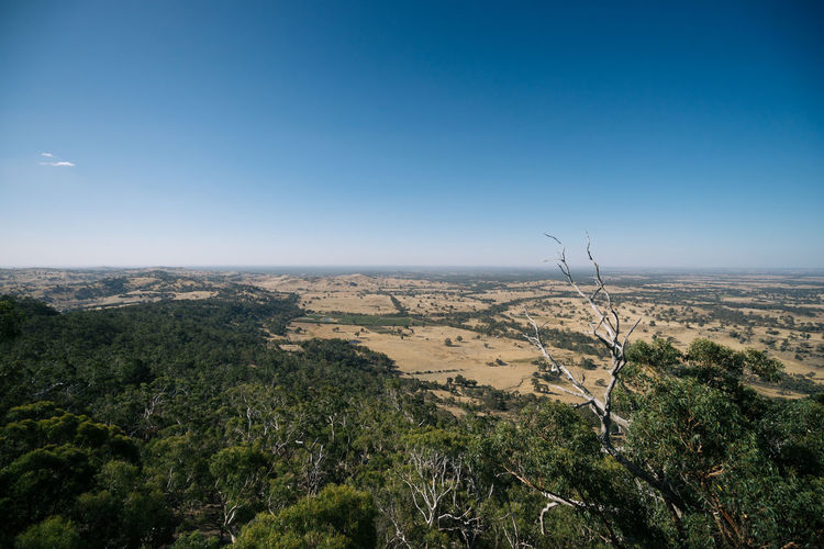 Scenic view of landscape from Mount Alexander, Victoria, Australia. Australia Australian Australian Landscape Farmland Lookout Victoria Arid Climate Beauty In Nature Blue Clear Sky Countryside Day Harcourt Landscape Mount Alexander Nature No People Outdoors Scenics Sky Summer Tranquil Scene Tranquility Travel Destinations Tree