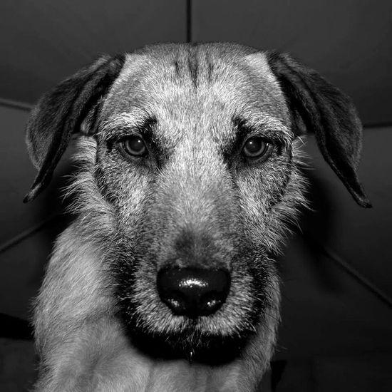 Close-up Dog Pets