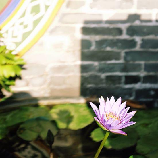 佛山. 祖庙 Fujifilm X100S 荷花 佛山 First Eyeem Photo