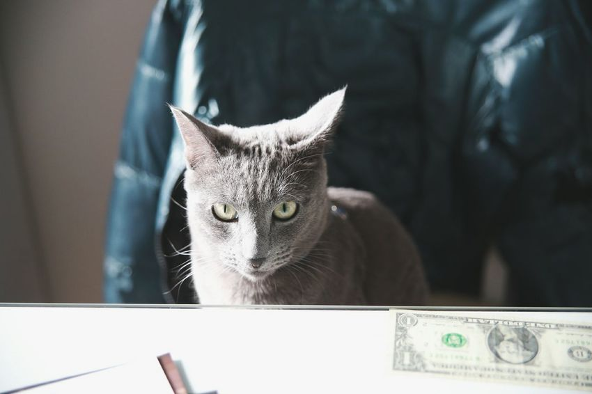 Pay back my money man~!! :) Ganster My Pet Funny Shot Check This Out From My Point Of View Canon 6D Eyem Animal Lovers