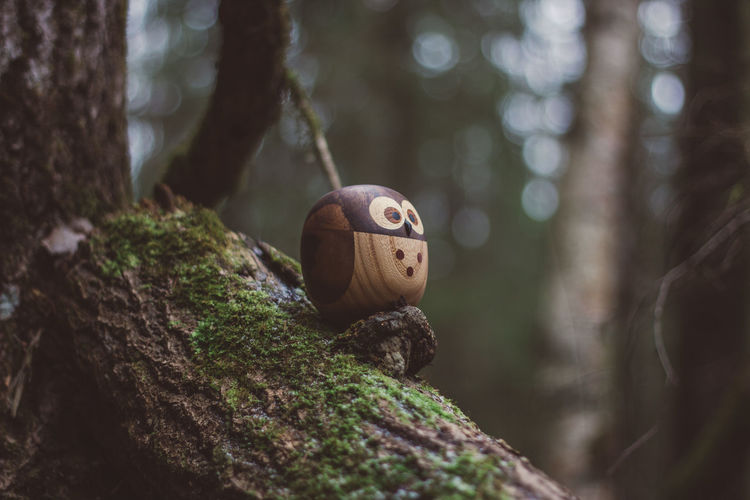 Forest Wood Wooden Wood - Material Toy Toys Wooden Toys Moss Tree Owl Tree Trunk Trunk Plant Representation Selective Focus Focus On Foreground Nature Human Representation Close-up Art And Craft No People Day Creativity Anthropomorphic Face Land Face Anthropomorphic Outdoors