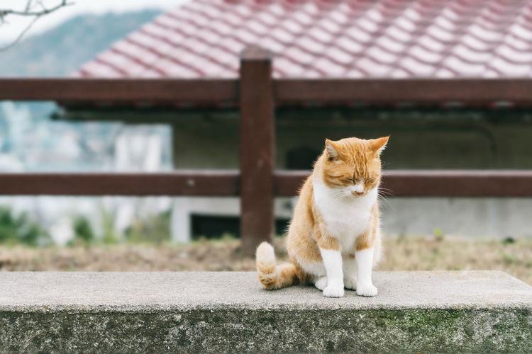Cat in onomichi city, hiroshima, japan