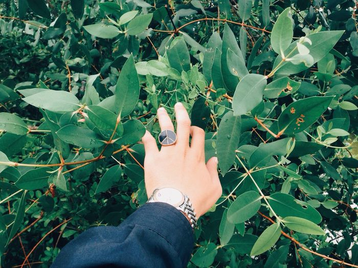 High angle view of hand touching plant