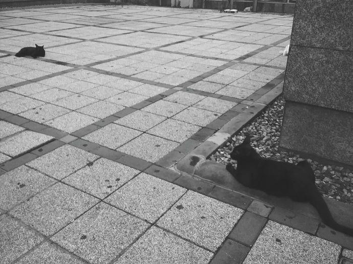 Cat black cat Black And White BLackCat Cat Lovers bangkok Bangkok Thailand.
