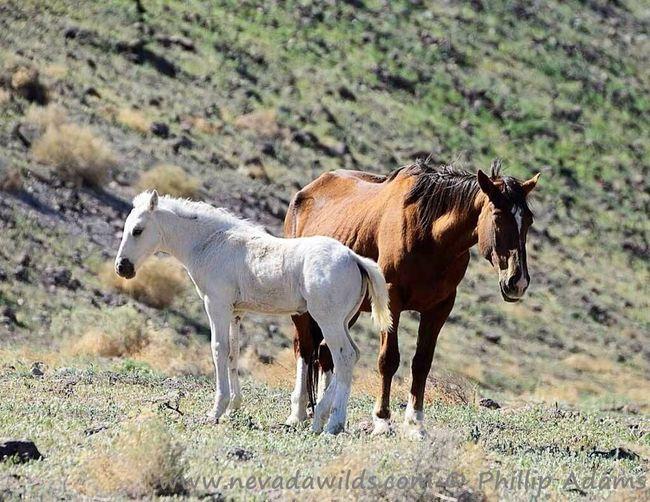 Horses I Love Horses Beautiful Horses Horse <3 White Awww Beautiful Horse Taking Photos Photography