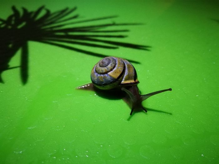 Traveling Animal Themes Animals In The Wild Close-up Green Color Nature Night No People One Animal Outdoors Shadow Slug Snail Snailhouse Wildlife The Week On EyeEm