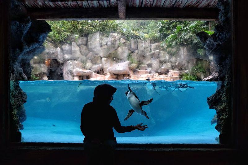 People swimming in aquarium
