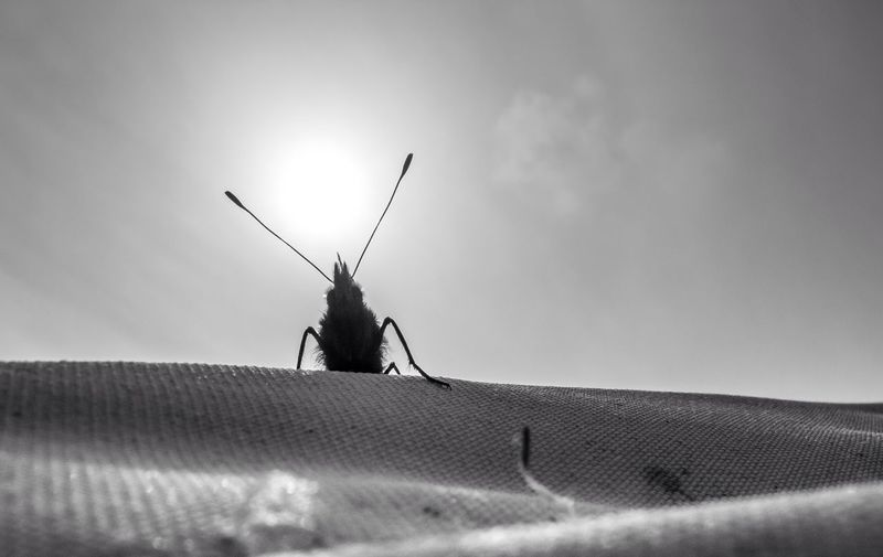 Close-up of insect on textured surface against sky