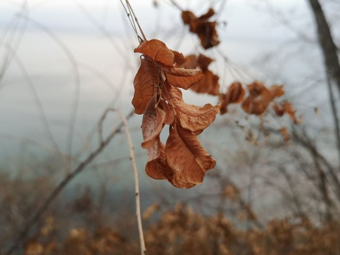 In the autumn forest Nature Stillife EyeEm Best Shots EyeEm Nature Lover Valysh_Tina Forest EyeEm Selects Branch Hanging Winter Autumn Close-up Sky Plant Life Growing Autumn Mood My Best Photo