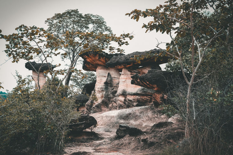 Low angle view of rock formation in forest against sky
