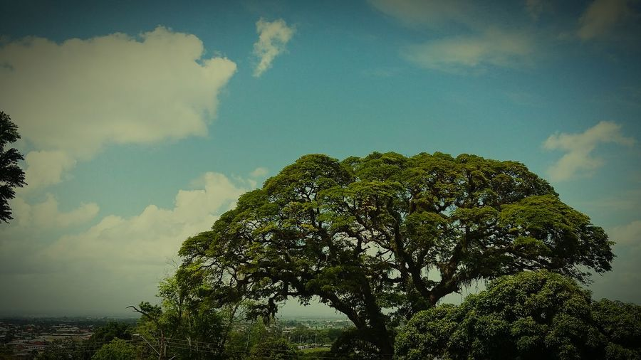 Showcase June - Living trees atop a mountain side. Secret tranquility above the everyday parts of life!