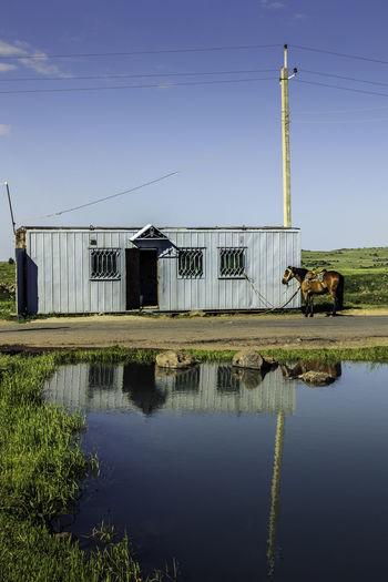 Horse Armenia