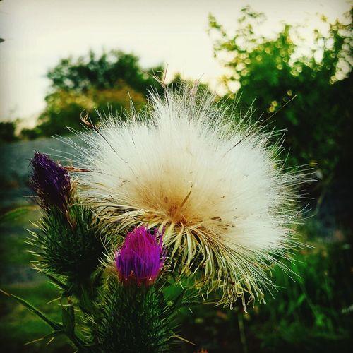 Flower Walking Around Eyem Best Shots Taking Photos