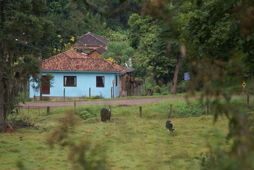 Landscapes Of Brasil and Mooday Monday NEM Landscapes NEM Architecture