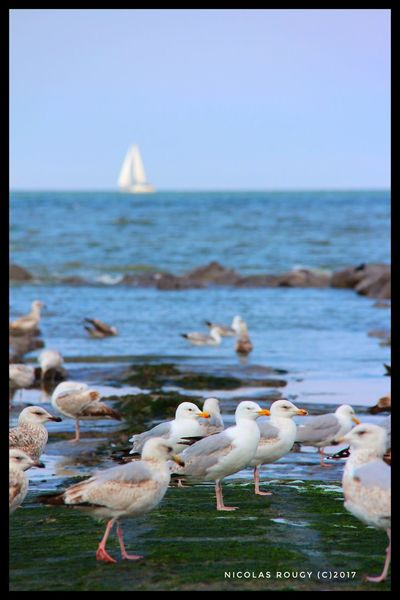 Sea Bird Water Nature Animal Themes Horizon Over Water Animals In The Wild Beauty In Nature Outdoors Scenics Focus On Foreground No People Day Seagull Clear Sky Large Group Of Animals Sky Perching Close-up