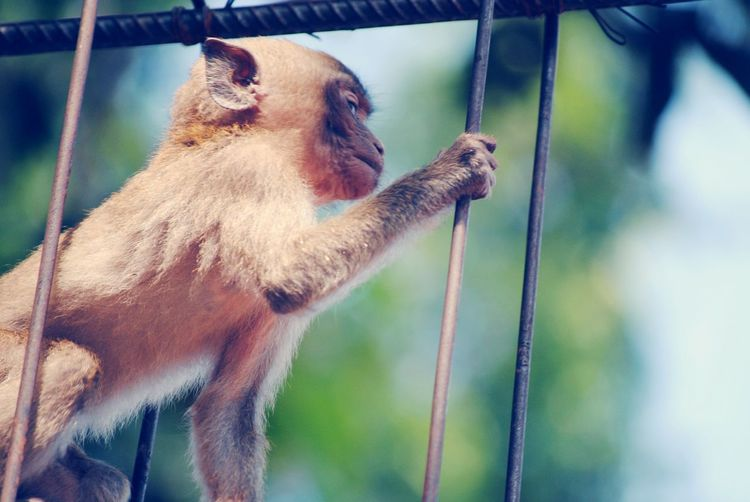 Close-up of monkey hanging on rope
