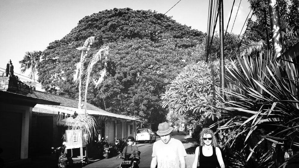 Nature Bali, Indonesia Hug A Tree