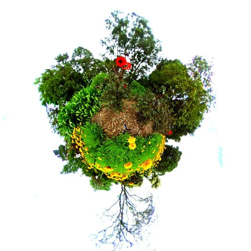 The Tiny Planet Nature The Tiny Planet Photo Effect Beauty In Nature Clear Sky Close-up Day Flower Flower Head Fragility Freshness Green Color Growth Nature No People Outdoors Sky Tiny Planet Fx Tiny Planet Natur Tiny Planet, Photo Editing,  Tree White Background first eyeem photo
