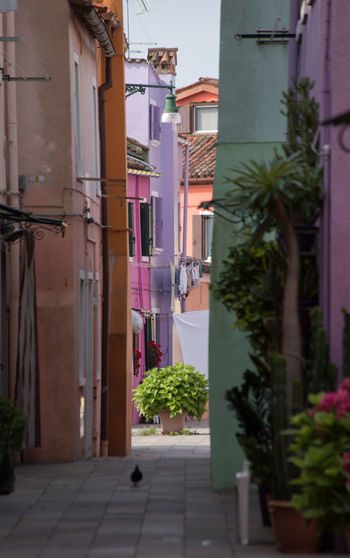 A Day in Burano Architecture Long Lens Narrow Street No People Outdoors Potted Plant Travel Destinations Travel Photography