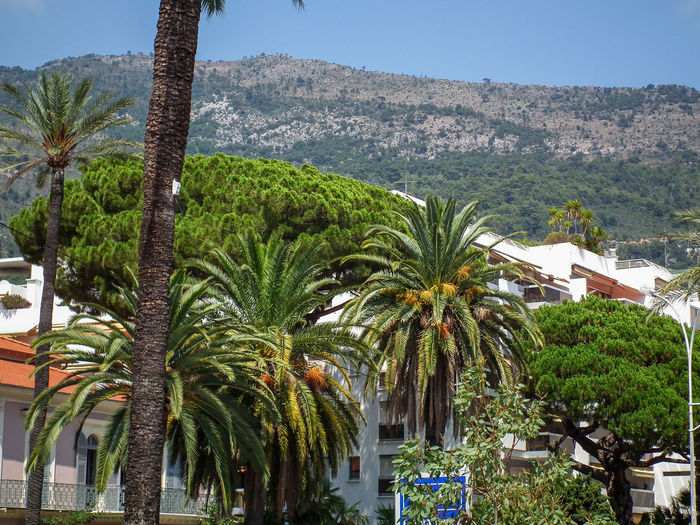 Beauty In Nature Costa Azzurra Côte D'Azur Day Estate Green Color Growth Menton Mentone Nature No People Outdoors Palm Tree Palm Trees Palme Palmen Palms Riviera Scenics Sky Sommer Summer Tree Tree Trunk Tropical Climate