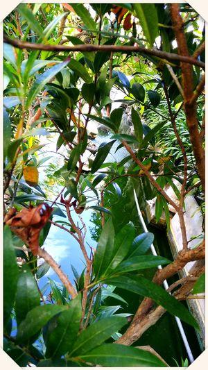 Leaf Tree Nature Plant