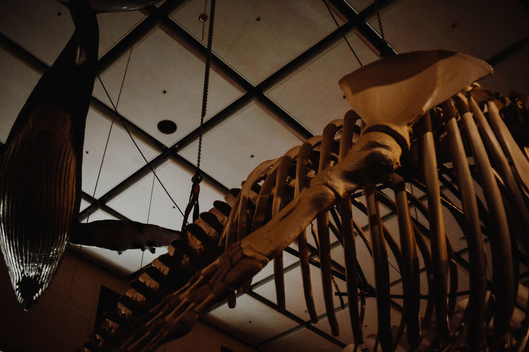 Museum Alone Educating Night Museum Whale Architecture Ceiling Hanging Indoors  Large Group Of Objects Low Angle View Metal Museum Museum At Night No People Scary Sceleton