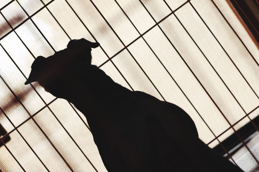 One Animal Animal Themes Domestic Animals Silhouette Mammal Pets Domestic Cat Feline Day Low Angle View Indoors  No People Close-up Focus On Foreground Japanese  Canon Canon 70d