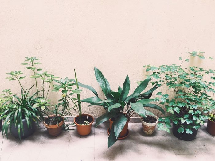 Close-Up Of Pot Plants Against The Wall