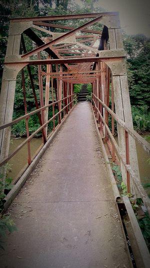 Taking Photos Nature Outdoors Bridge