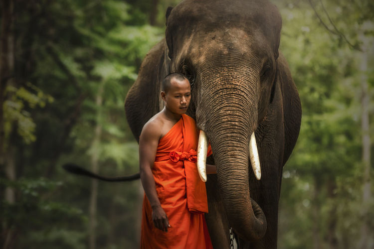 Monk with elephant in the forest . Animal Themes Animal Trunk Animal Wildlife Animals In The Wild Beauty In Nature Day Domestic Animals Elephant Lifestyles Mammal Nature One Animal One Person Outdoors People Portrait Real People Standing Tree