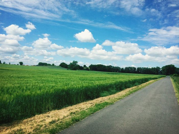 Nature scenery with green cereal field