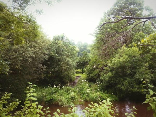Lush Llanidloes ... River River Severn Steps Park Summer Wales MidWales Powys Lush