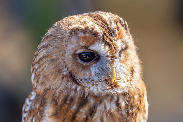 Close-up of owl looking away outdoors