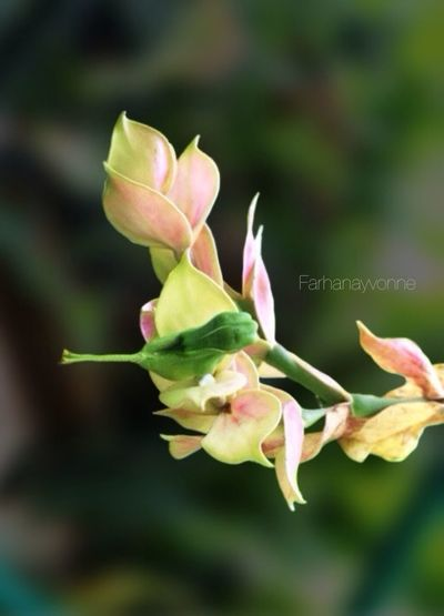 Green Birdy Flower ... EyeEm Nature Lover Flowers Streamzoofamily Green