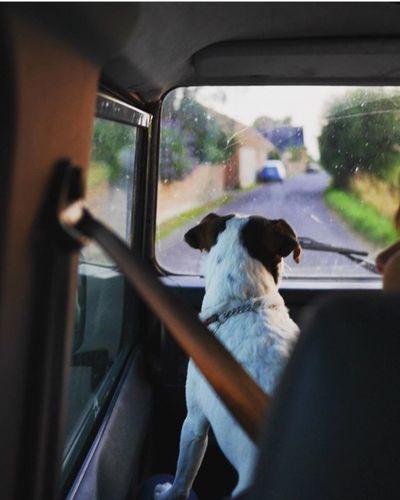 Land Rover Defender Dog
