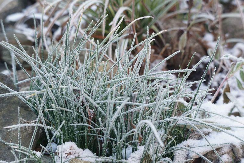 Cold Temperature Winter Snow Plant Frozen Nature No People