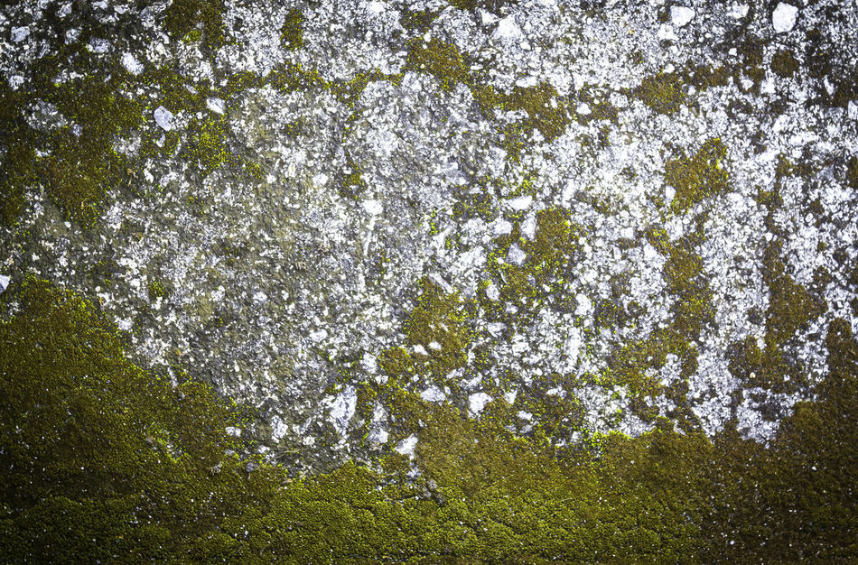 Pattern and texture of concrete with plant background Retro Wall Weathered Abandoned Abstract Backdrop Backgrounds Cement Concrete Creative Design Distress Effect Floor Gloomy Grunge Material Pattern Rough Scratch Stain Stone Surface Texture Vintage