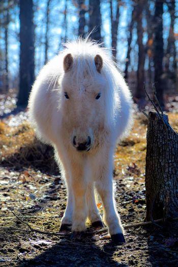 Horse Pony Full