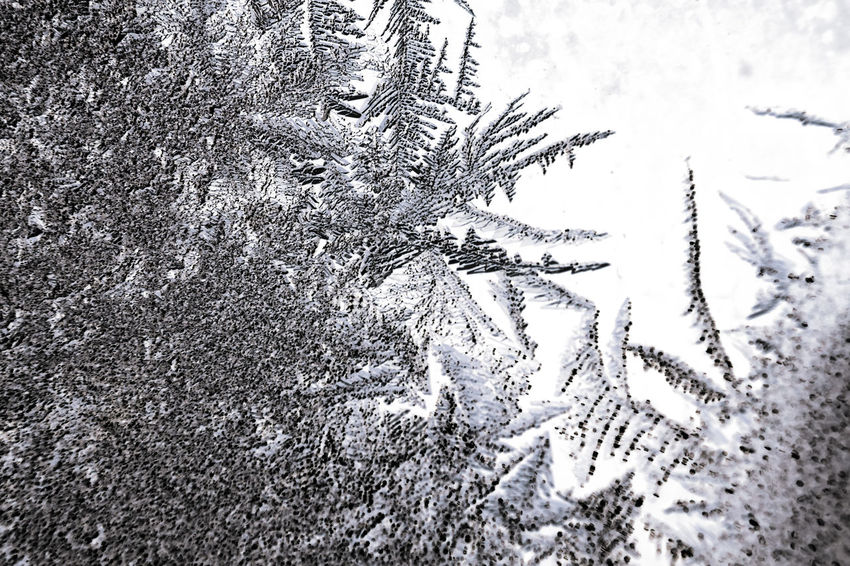 Frozen iced background. Ice pattern on the glass. Macro frost turn into negative black white photo Ice Icy Freeze Frozen Winter Wintertime Macro Snoflakes Ice Pattern Crystal Crystals Frost Frosting Glare Sparkles Texture Textures and Surfaces Whitefrost Black & White Negative Photography Frosty Rime Snowflakes Pattern Snow Crystals Macro Photography Macro Nature Snow Macro Snowlake Close-up Frozy Glass Structure And Nature