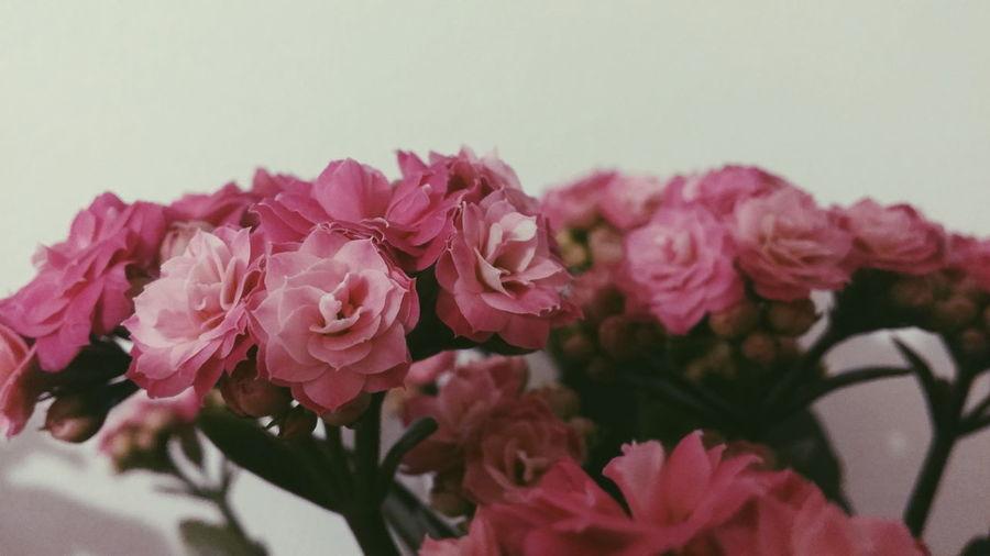 Flowers Pink Flower