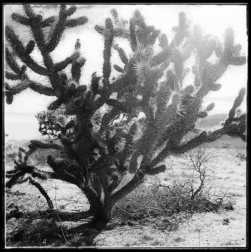 Fujifilm Fujix100f Black And White Blackandwhite Photo444 Nature